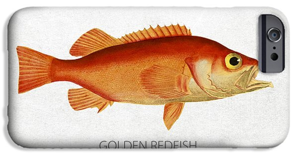 Redfish iPhone Cases - Golden redfish iPhone Case by Aged Pixel