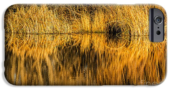 Meadow Photographs iPhone Cases - Golden Reflections iPhone Case by Sue Smith