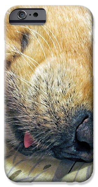 Golden Retriever Dog Little Tongue iPhone Case by Jennie Marie Schell