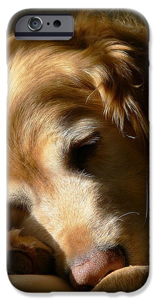 Golden Retriever Dog Sleeping in the Morning Light  iPhone Case by Jennie Marie Schell