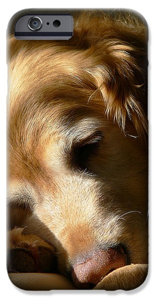 Close Up iPhone Cases - Golden Retriever Dog Sleeping in the Morning Light  iPhone Case by Jennie Marie Schell