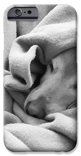 Golden Retriever Dog Under the Blanket iPhone Case by Jennie Marie Schell