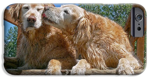 Animals Photographs iPhone Cases - Golden Retriever Dogs The Kiss iPhone Case by Jennie Marie Schell