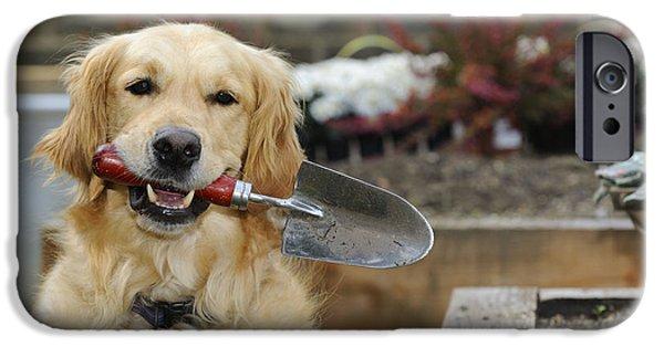 Dog Close-up iPhone Cases - Golden Retriever Gardening iPhone Case by John Daniels
