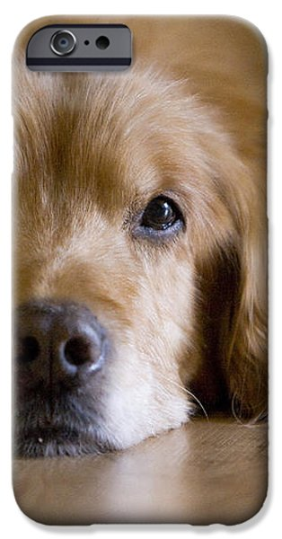 Golden Retriever Missing You iPhone Case by James BO  Insogna