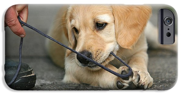 Dog Photos iPhone Cases - Golden Retriever puppy chewing a shoelace iPhone Case by Dog Photos