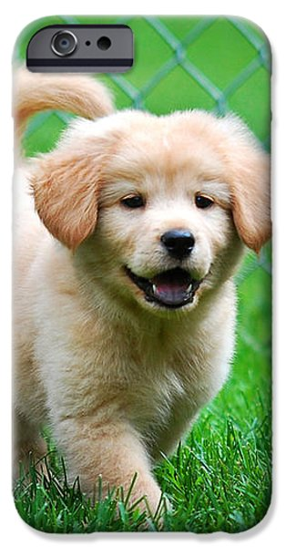Golden Retriever Puppy iPhone Case by Christina Rollo