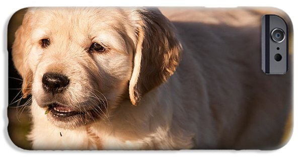 Fuzzy Golden Puppy iPhone Cases - Golden Retriever Puppy iPhone Case by Chuck Spang