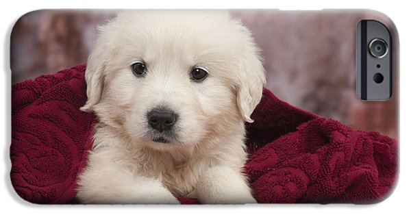 Fuzzy Golden Puppy iPhone Cases - Golden Retriever Puppy Dog iPhone Case by Jean-Michel Labat