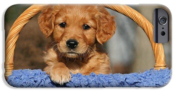 Dog Photos iPhone Cases - Golden Retriever puppy in a basket iPhone Case by Dog Photos