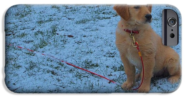 Cute Puppy iPhone Cases - Golden Retriever Puppy In The Snow iPhone Case by Dan Sproul