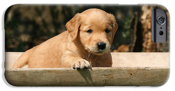 Dog Photos iPhone Cases - Golden Retriever puppy in wooden bowl iPhone Case by Dog Photos