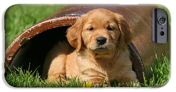 Dog Photos iPhone Cases - Golden Retriever puppy lying in grass iPhone Case by Dog Photos