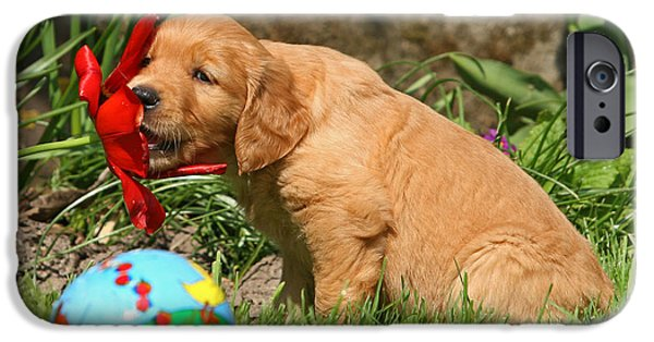 Dog Photos iPhone Cases - Golden Retriever puppy nibbling on a flower iPhone Case by Dog Photos