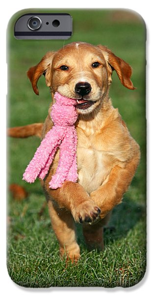 Dog Photos iPhone Cases - Golden Retriever puppy playing with toy iPhone Case by Dog Photos
