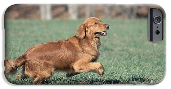 Recently Sold -  - Fauna iPhone Cases - Golden Retriever Running iPhone Case by David Davis