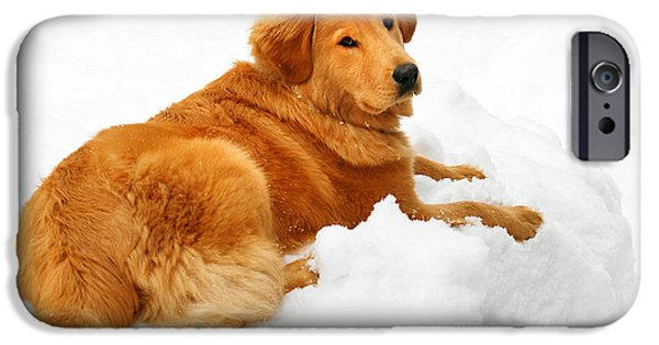 Fuzzy Golden Puppy iPhone Cases - Golden Retriever Snowball iPhone Case by Christina Rollo