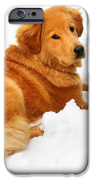 Golden Retriever Snowball iPhone Case by Christina Rollo