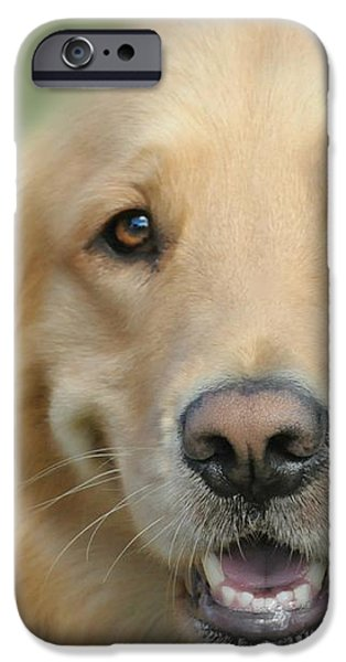 Golden Retriever Standard iPhone Case by Diana Angstadt