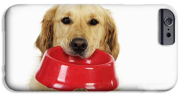 Dog Close-up iPhone Cases - Golden Retriever With Bowl iPhone Case by John Daniels