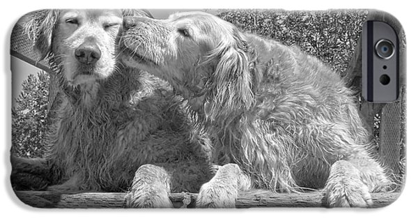 Comics iPhone Cases - Golden Retrievers the Kiss Black and White iPhone Case by Jennie Marie Schell