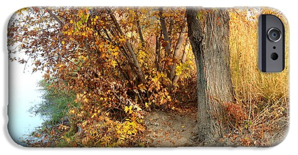 Fall Scenes iPhone Cases - Golden Riverbank iPhone Case by Carol Groenen