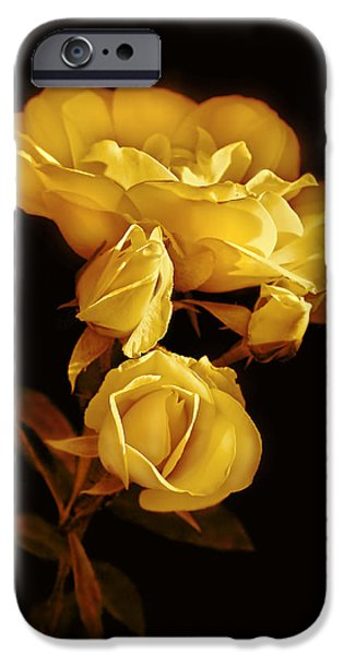 Gold Rose iPhone Cases - Golden Roses at Midnight iPhone Case by Jennie Marie Schell