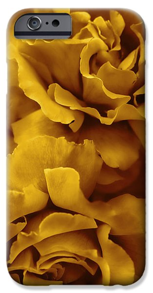 Monotone iPhone Cases - Golden Yellow Roses iPhone Case by Jennie Marie Schell