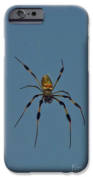Lynda Dawson-youngclaus Photographer iPhone Cases - Golden Silk Orbweaver iPhone Case by Lynda Dawson-Youngclaus