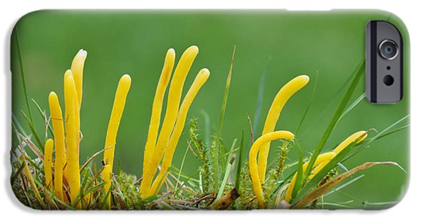 Agaricales iPhone Cases - Golden Spindles iPhone Case by Dave Pressland/FLPA