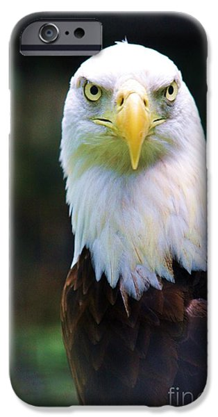 Flight iPhone Cases - Golden Stare iPhone Case by Chuck  Hicks