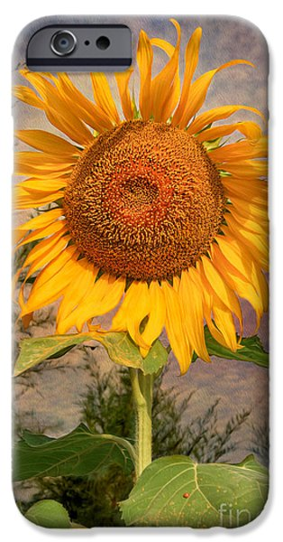 Stamen Digital iPhone Cases - Golden Sunflower iPhone Case by Adrian Evans