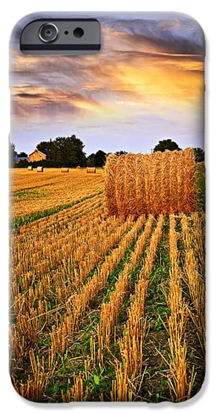 Summer iPhone Cases - Golden sunset over farm field in Ontario iPhone Case by Elena Elisseeva