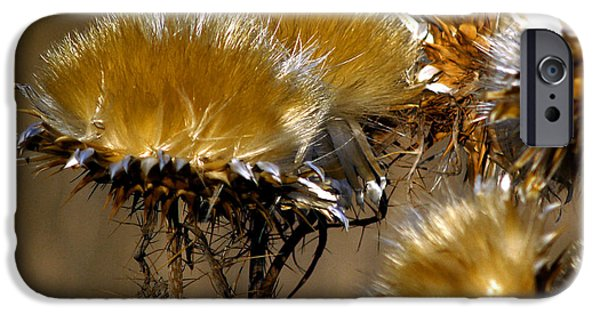 Bill Gallagher Photographs iPhone Cases - Golden Thistle iPhone Case by Bill Gallagher