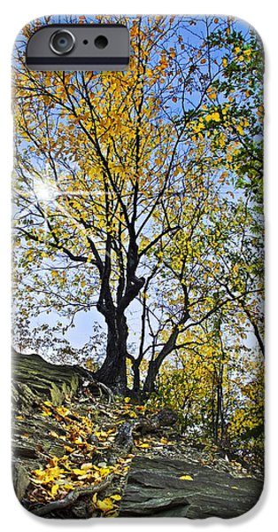 Buttermilk Falls iPhone Cases - Golden Tree iPhone Case by Christina Rollo