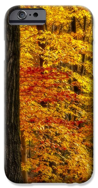 Golden Trees Glowing iPhone Case by Susan Candelario
