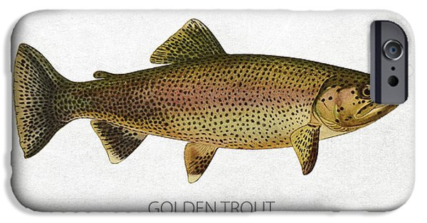 Golden Trout iPhone Cases - Golden Trout iPhone Case by Aged Pixel