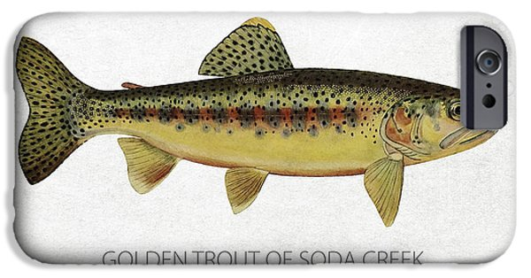 Golden Trout iPhone Cases - Golden Trout of Soda Creek iPhone Case by Aged Pixel