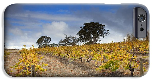 Grape Vines iPhone Cases - Golden Vines iPhone Case by Mike  Dawson
