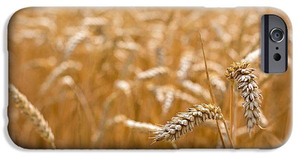 Crops iPhone Cases - Golden Wheat. iPhone Case by Gary Gillette