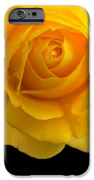 Gold Rose iPhone Cases - Golden Yellow Rose and Black iPhone Case by Jennie Marie Schell