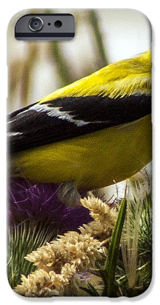 Goldfinch atop a Purple Thistle iPhone Case by Darleen Stry