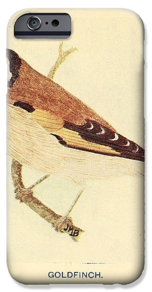 Goldfinch iPhone Case by Philip Ralley