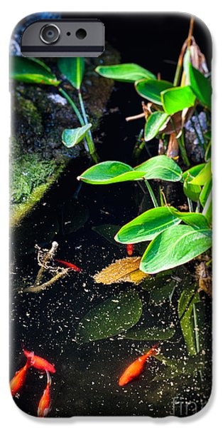 Aquatic Plants iPhone Cases - Goldfish in pond iPhone Case by Silvia Ganora