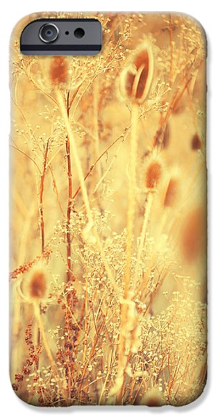 Fall Grass iPhone Cases - Golgen Shades of Wild Grass 1 iPhone Case by Jenny Rainbow