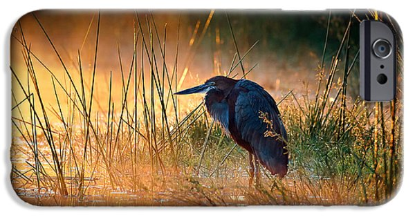 One Animal iPhone Cases - Goliath heron with sunrise over misty river iPhone Case by Johan Swanepoel