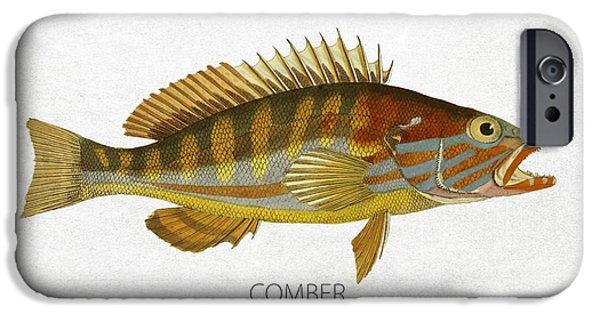 Aquarium Fish iPhone Cases - Comber iPhone Case by Aged Pixel