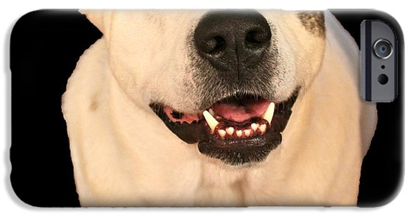 Good Dog iPhone Case by Bellesouth Studio