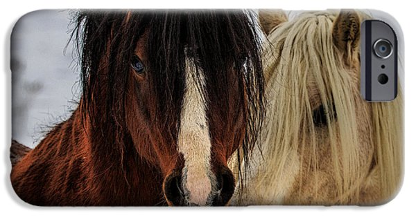 Horse Photographs iPhone Cases - Good Friends iPhone Case by Everet Regal