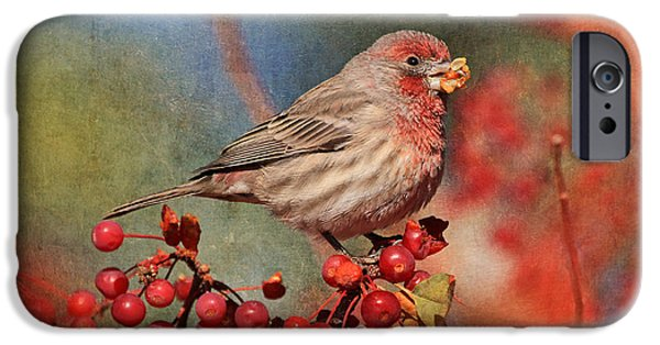 Finch iPhone Cases - Good Grief   These Berries Sure Are Messy  iPhone Case by Donna Kennedy